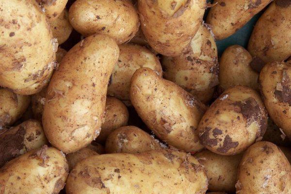 Schaudepot – Hessisches Kartoffelmuseum